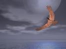 eagle gloomy sky